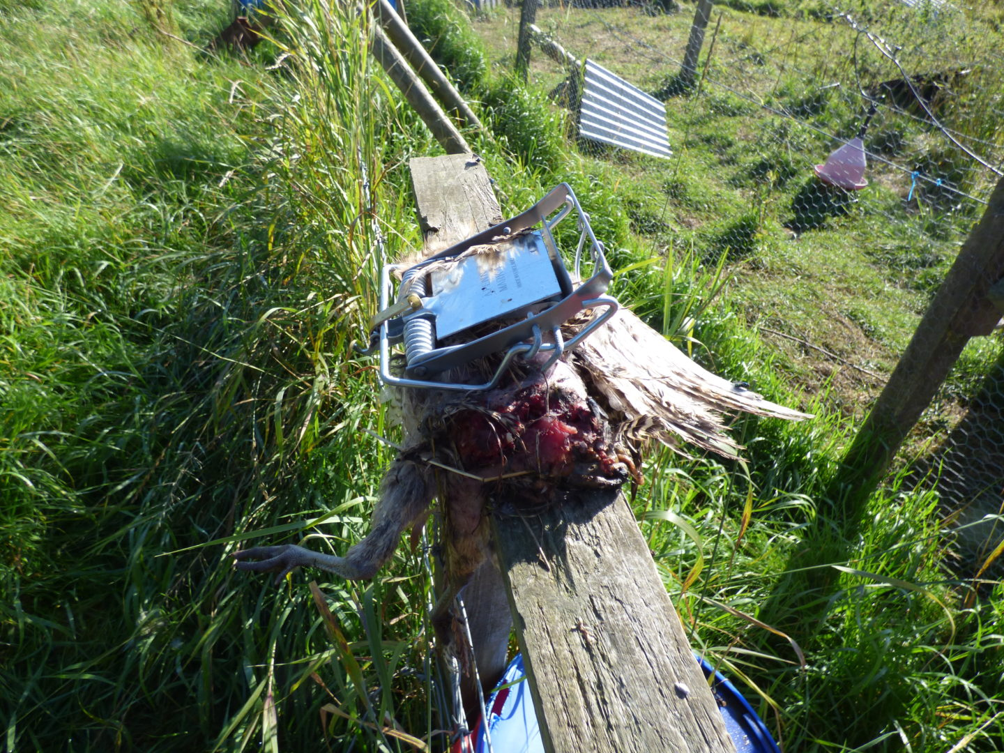 Footage Of Illegal Trap Released Amid Fresh Calls For More Powers