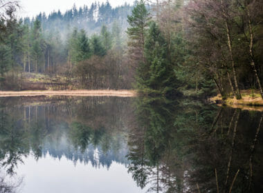 Wildlifet threatened by Dumfries and Galloway